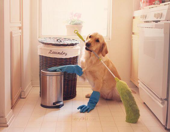 outdoor cleaning checklist - pets