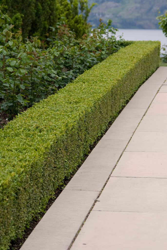 strata hedge maintenance