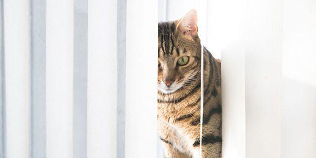 clean vertical blinds